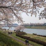 秋田空港から角館へ桜を見にいきました