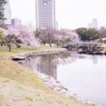 桜の季節の浜離宮